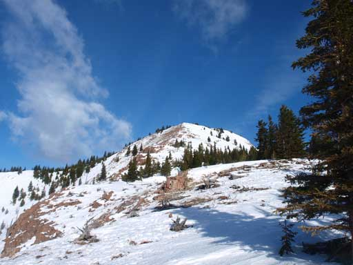 The upper slope of Mount Fortune