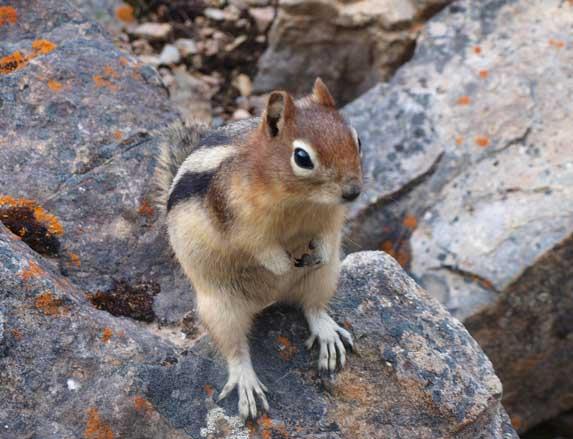 A little critter