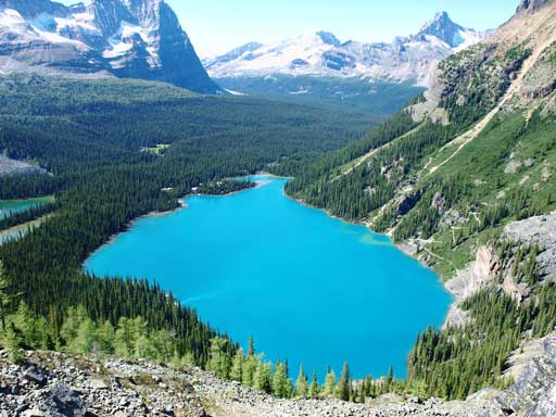 Looking down at Lake O'Hara from Yukness Ledge