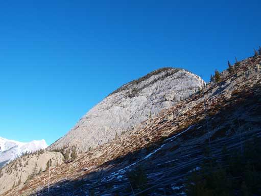 Morro Peak. Note the deadfall field