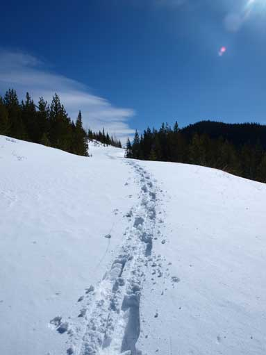 I had to break-trail on this forestry road, on snowshoes