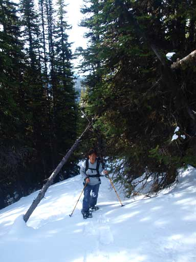 The typical forested ascent