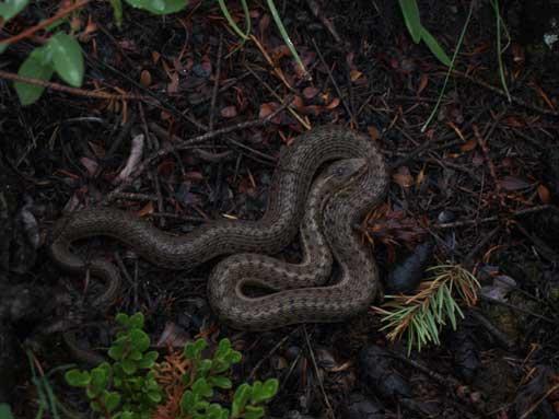 A snake...