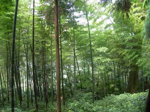 Typical view in the forest