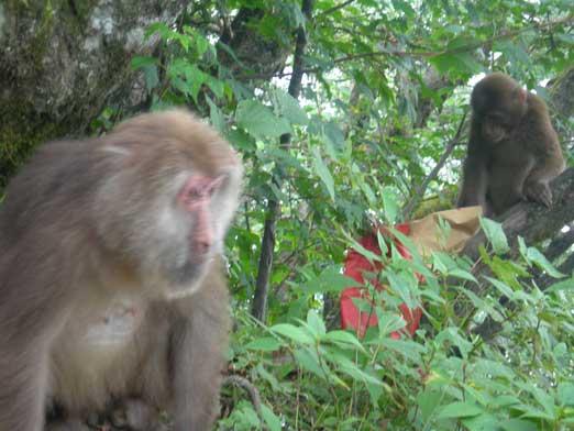 Finally got a photo of the monkeys.