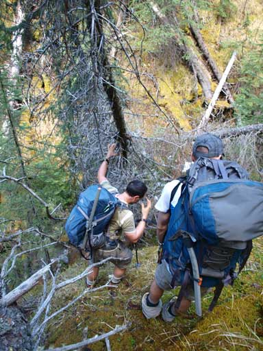 Bushwhacking down a steep forested slope