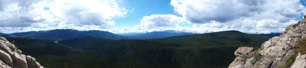 Panorama view from treeline