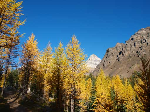 Scenic hike through Larch Valley