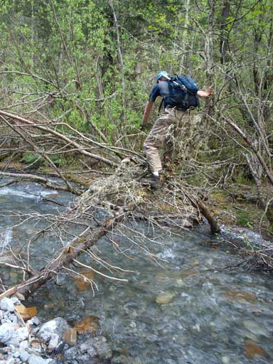 Ken crossing the creek on a natural log bridge