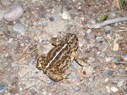 I almost stepped onto this toad...