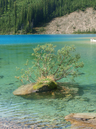 I love this little tree on a boulder in the lake