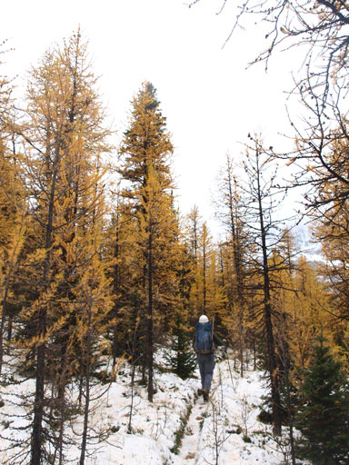 The larches were out on full force!