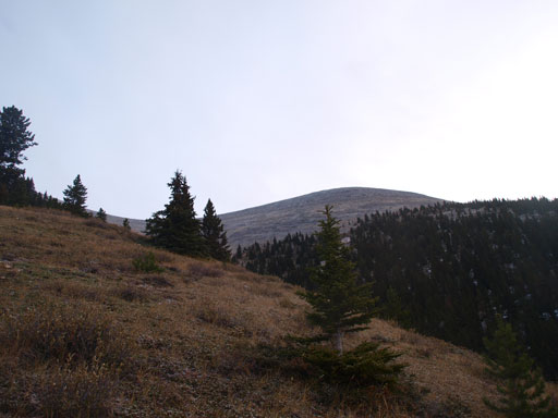 Typical view looking up from near treeline