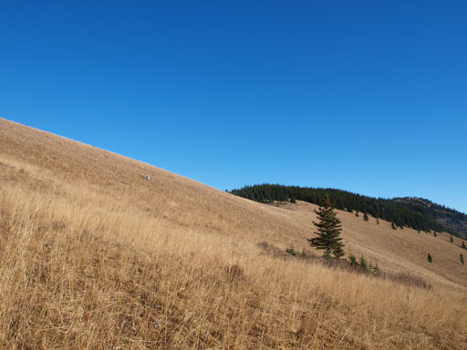 Pretty grassy slope in late season condition