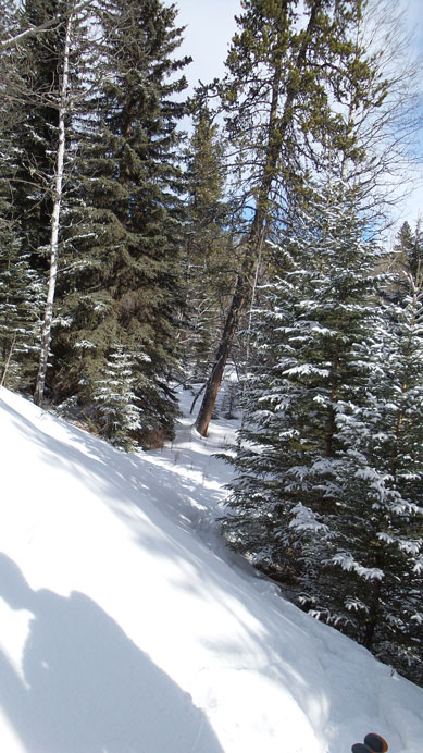 An old snowshoe track led us up the forest