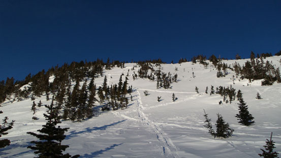 Descending the steepest slope at treeline