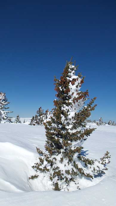 One of the many small trees on the plateau