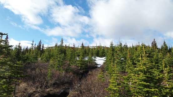 Near treeline