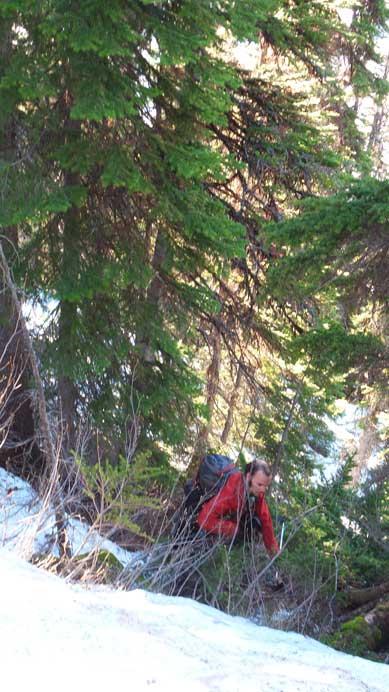 A bit higher up, still bushy.