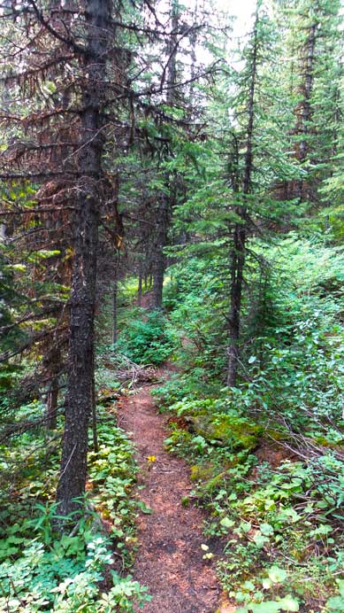 This trail is actually quite pleasant - too bad I could locate it on the way in...