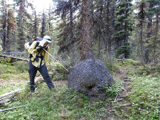Me trying to stab the tree trunk tuber. Photo by Doug Lutz