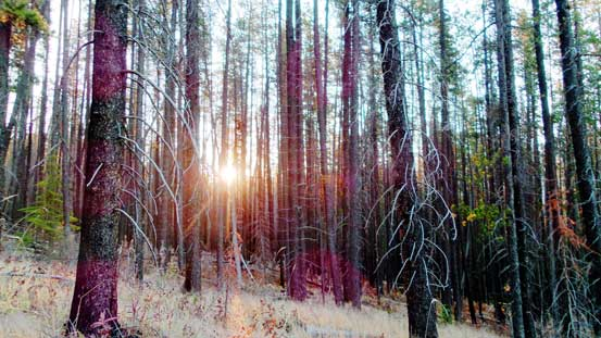 Sunbeam shone through a burnt forest