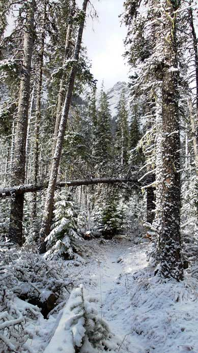 The trail got narrower