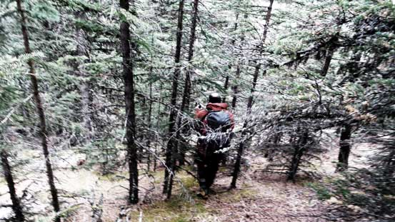 Bushwhacking down the typical forest