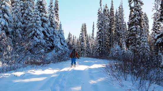 Snowshoeing up the forestry road