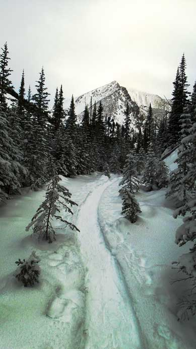 Following a well-packed snowshoe trail