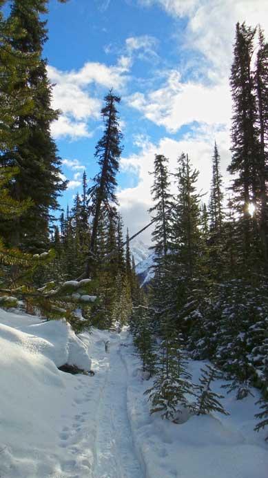 Back to Sawmill trail