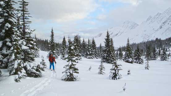 Skiing upwards along the tributary of Miette River. Terrain starts to open up again.