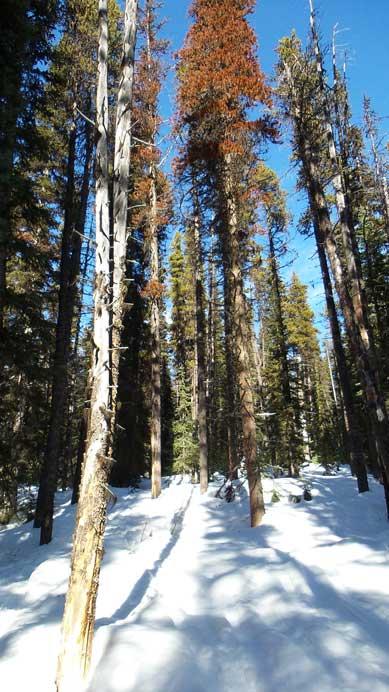 Descending the Yellowhead Mountain trail.