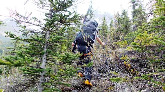 Bushwhacking on a trail...