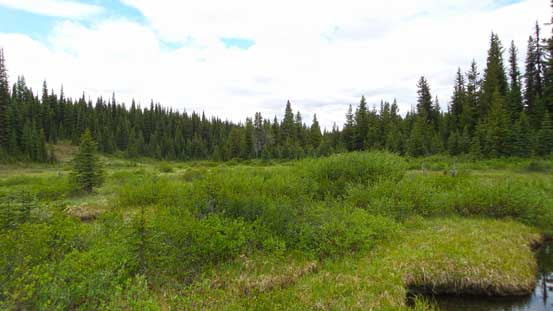 Down to the broad meadows by Elk Pass Trail. Prime bear terrain...