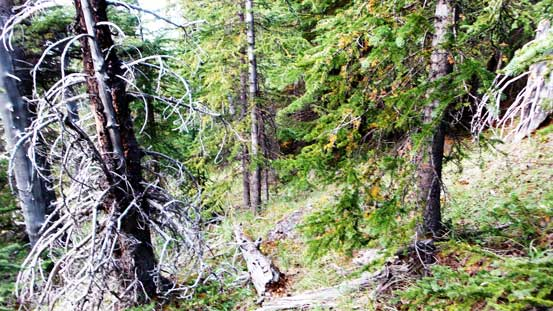 Bushwhacking in the upper forest