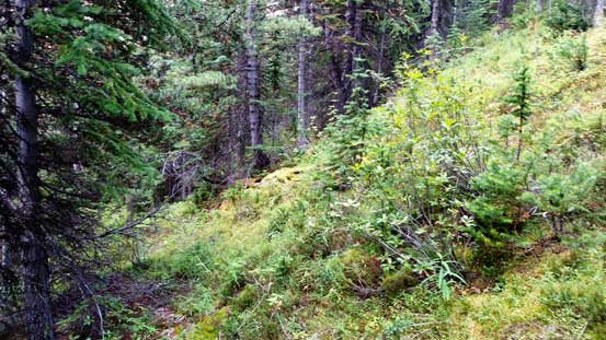 Light bushwhacking is unavoidable no matter how you approach this