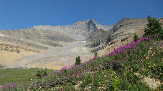 Flowers, grass and Mt. Saskatchewan