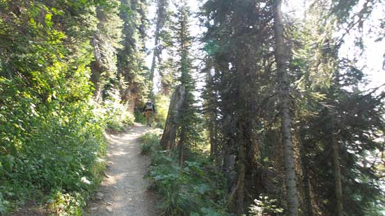Sections of this trail goes into the forest