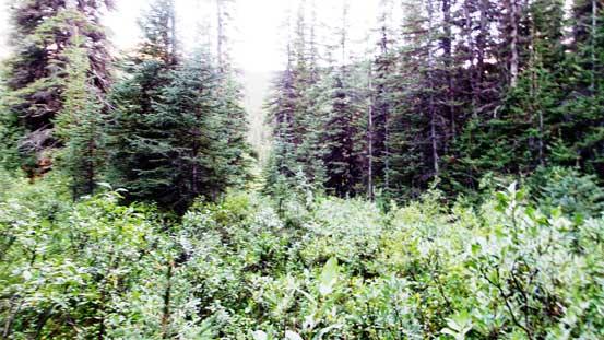 Bushwhacking along Rockingham Creek