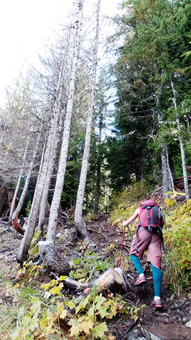 The typical forested hike