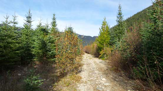 The logging road walk at the end