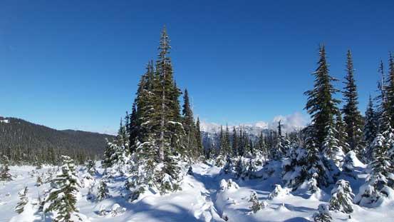 Sub-alpine terrain
