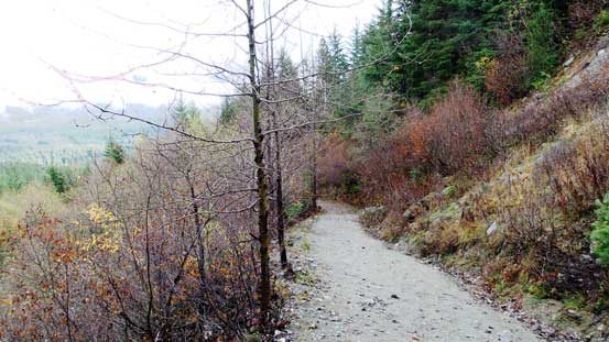 One section of this trail follows this logging road up