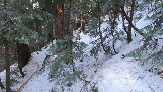 Bushwhacking up the forested slope