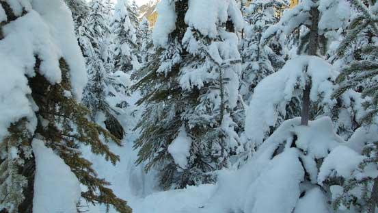 Still a bit of bush skiing near the end.