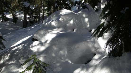 Lots and lots of snow in the forest