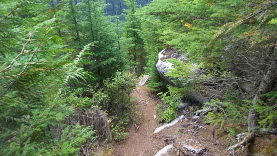 Entering the lower secondary growth forest