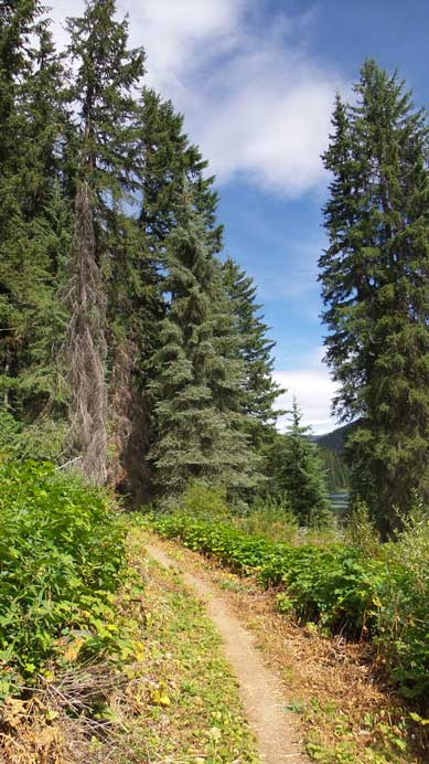 The trail passing Lightning Lake
