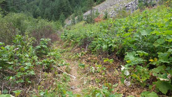 Trail beyond Strike Lake has a few narrow sections
